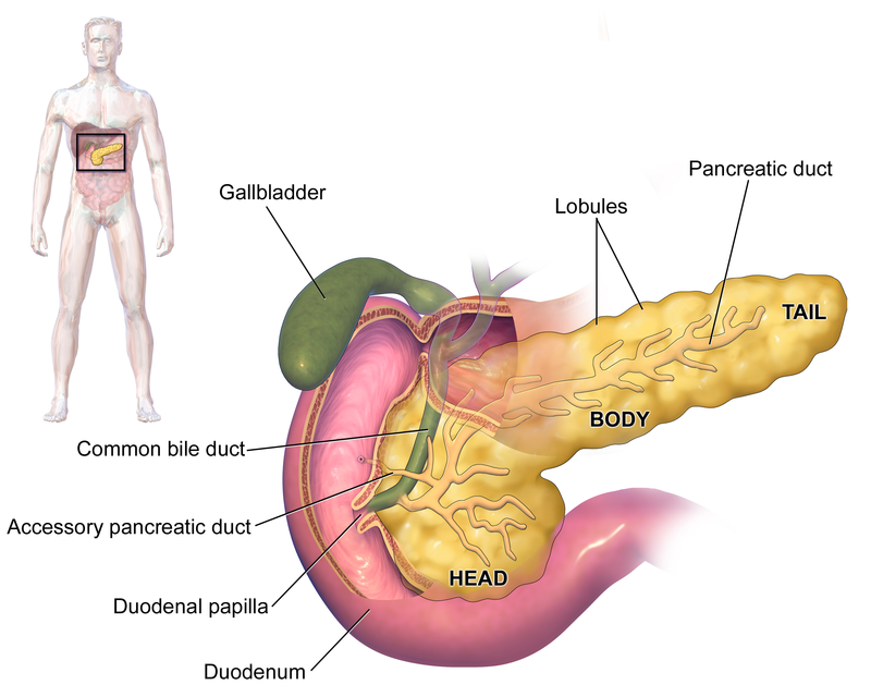 Difference Between Pancreatitis and Gallbladder Attack