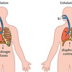 Difference Between Respiration and Cellular Respiration