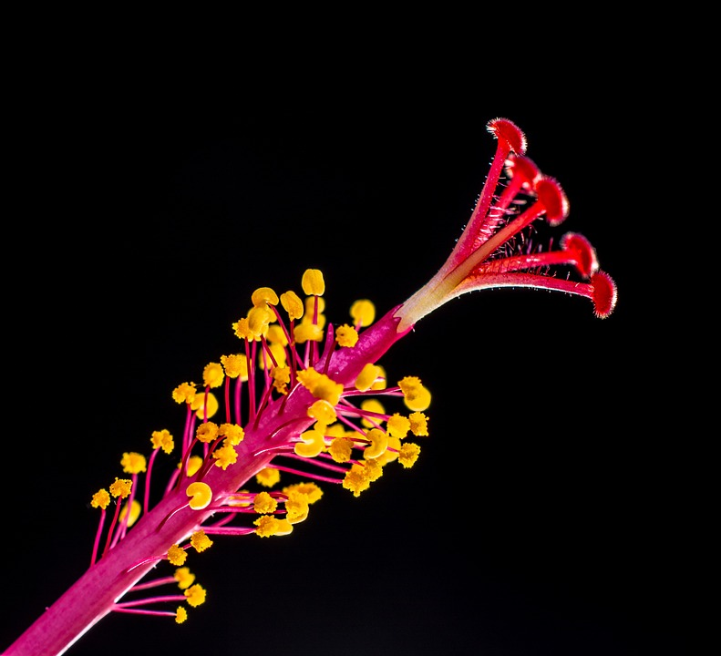 Key Difference Between Stamen and Pistil