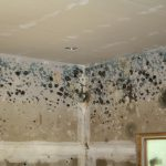 Difference Between White Mold and Black Mold