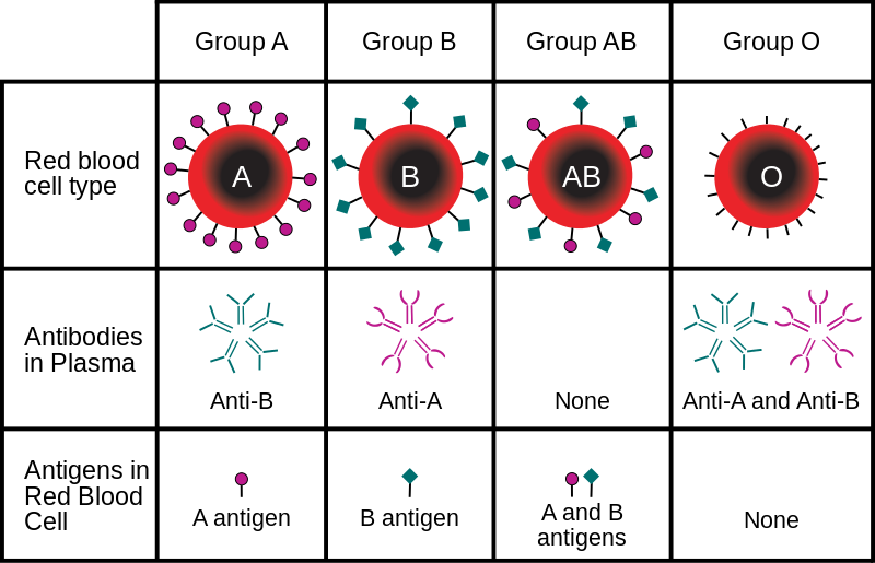 Key Difference Between A and B Antigen