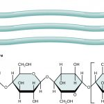 Difference Between Chitin and Cellulose