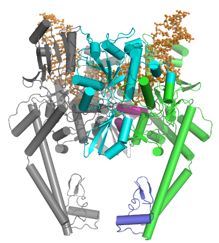 Key Difference Between Topoisomerase I and II