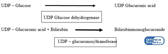Difference Between Direct and Indirect Bilirubin