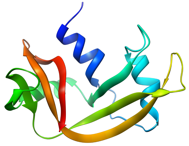 Difference Between RNASE A and RNASE H