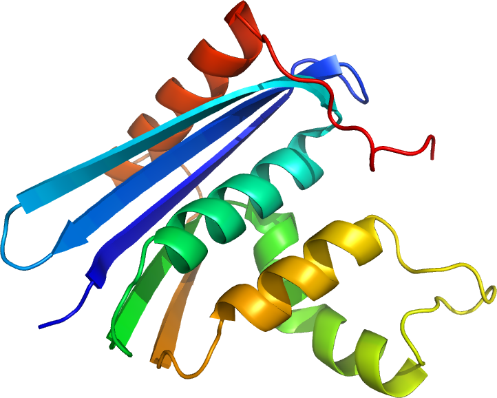Key Difference Between RNASE A and RNASE H