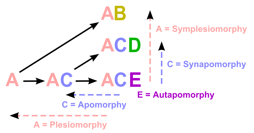 Key Difference Between Synapomorphy and Symplesiomorphy