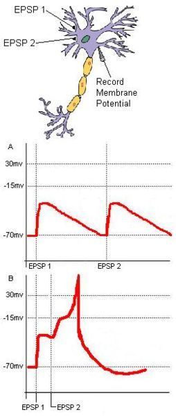 Difference Between EPSP and IPSP