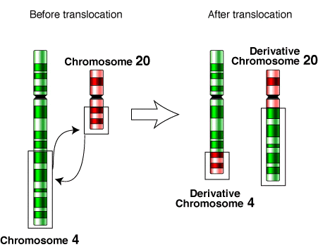 Key Difference Between Inversion and Translocation