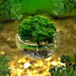 Difference Between Autecology and Synecology